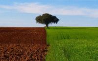 field Green Planet