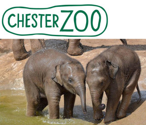 chesterzoo small 300x258 Customer Case Study: How the Chester Zoo Enhanced the Customer Experience through Mobile