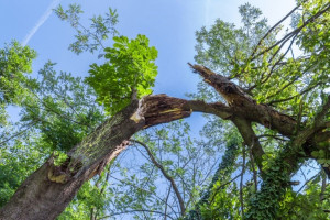 trees 300x200 Tips for Increasing Your Business Resiliency and Continuity Today